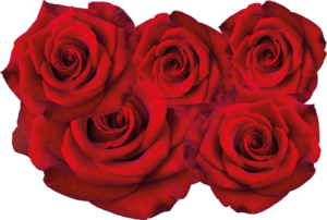 Six red roses in a bunch